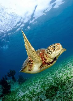 """Our mission is to """"Influence by Design"""" and to promote awareness and efforts to preserve our surroundings. Turtle"""