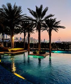 First time in Dubai  #palmtrees #sunset #pooltime #poolview #mobilephotography #traveladdicted #hotel Mobile Photography, Business Travel, Palm Trees, First Time, Dubai, River, Sunset, Outdoor Decor, Palm Plants