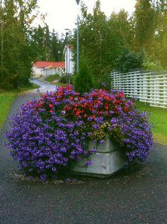 Kesän kukkasia
