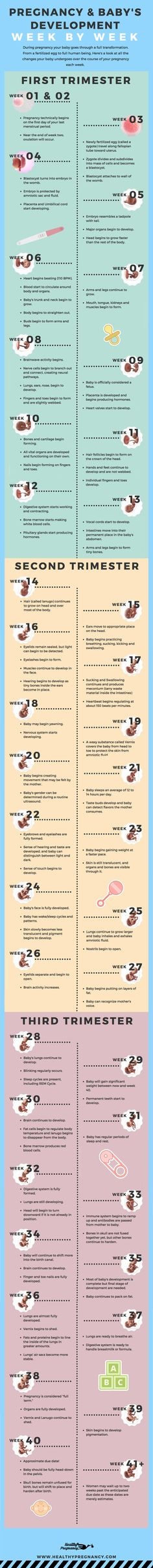 Pregnancy is a nine-month rollercoaster of changes. This guide can help you understand the changes  your baby will be going through during each week of your pregnancy.   Pregnant | Week by Week | Calendar | Pregnancy Calendar | Baby's Development | Fetus Development | Baby's Growth