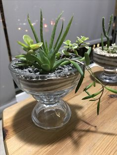 Succulent Terrarium, Cacti And Succulents, Planting Succulents, Garden Plants, Plants In Glass Bowl, Painted Flower Pots, Best Indoor Plants, Interior Plants, Cactus Y Suculentas