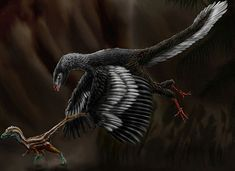 Archaeopteryx is the single most famous transitional form in the fossil record, but this bird-like dinosaur has mystified generations of paleontologists, who. Cool Dinosaurs, Baby Dinosaurs, Dinosaur Skeleton, Dinosaur Bones, Long Neck Dinosaur, Nicolas Vanier, Birds For Kids, Feathered Dinosaurs, Good Anime Series