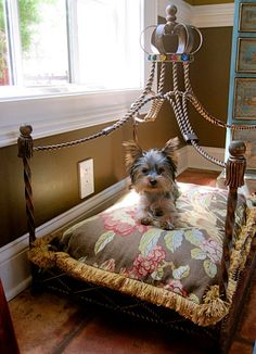 "Princess Pooch!  ....and I thought mine was a ""Princess and the Pea"". LOL."