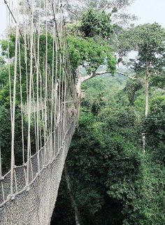 Canopy Walk, Ghana...Can't say Ghana was on the bucket list, but travel is travel and I can't wait for January!