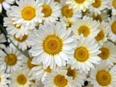 Google Image Result for http://www.natures-desktop.com/wallpaper-previews/flowers/white-petaled-flowers.jpg