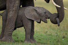 Michael Nichols from National Geographic captured a newborn elephant being taught by its mother how to use its trunk in the Serengeti National Park