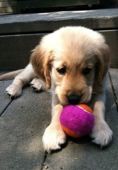 Who's Gonna Play with Him  http://cute-overload.tumblr.com