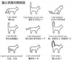 猫と尻尾の関係図 これは勉強になった