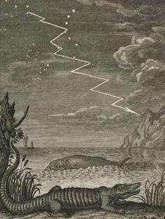 Physica sacra: iconibus aeneis illustrata - Johannes Jacobus Scheuchzer - c.1732-1735