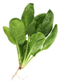 Maintenance: Being heat-intolerant, spinach can tolerate some shade and actually prefers it in the hottest part of the summer. Apply a nitro...
