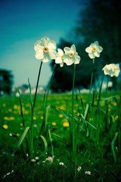 Le printemps est dans notre jardin !
