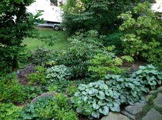 woodland garden - Google Search