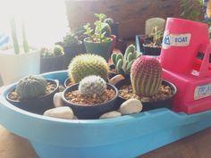 Ship for cactus