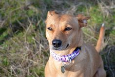 ZoePhee: Windy Walks on Fit Dog Friday!