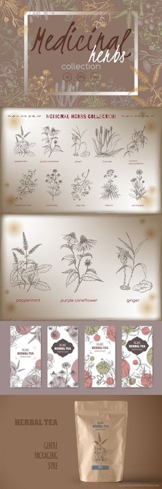 This collection includes detailed hand drawn vector sketches of medicinal herbs and plants. This set can be an invaluable help if you need to prepare herbal Medicine Packaging, Tea Packaging, Packaging Design, Product Packaging, Tea Logo, Floral Texture, Plant Drawing, Branding, Flower Tea