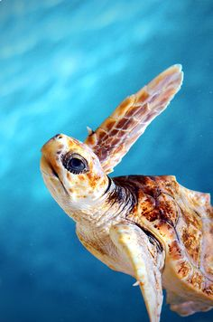 """"""" Turtle BY Mike Gowen """""""