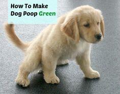 Flushable Dog Poop Bags!