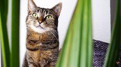 Nicht alle Pflanzen sind für die Katz'… buchstäblich. Aber ein paar schöne Exemplare gibt es trotzdem, die nicht giftig für Katzen sind. Und die habe ich mir ins Haus geholt …