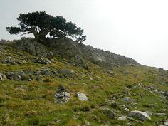 Terre Alte del Pollino: il Monte di Apollo 2.248 m - Escursione impegnativa ma che permette di raggiungere una delle cinque vette del Parco del Pollino sopra i 2.000 metri di quota: Monte Pollino, ed offrire panorami su tutto il circondario dal versante Calabro a quello Lucano incontrando i maestosi e affascinanti pini loricati che si abbarbicano... - http://www.eventiincalabria.it/eventi/terre-alte-del-pollino-il-monte-di-apollo-2-248-m/