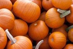 Who knew that the oldest pumpkin seeds date back 8,000 to 10,000 years, or that the US produces more than one billion pounds of pumpkins each year! Plus 8 more little known facts about pumpkins.