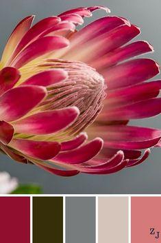 ZJ Colour Palette 819 #colourpalettes #colourinspiration House Color Schemes, Colour Schemes, Color Combinations, Paint Color Palettes, Colour Pallete, Backgrounds Tumblr Pastel, Protea Flower, Pastel House, Mood Colors