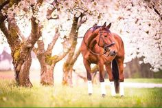 horse, flowers, and love image