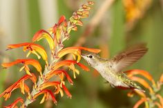 How to Attract Hummingbirds to Your Garden Year-Round