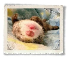 """""""Adorable ferret"""" by red223 ❤ liked on Polyvore featuring art"""