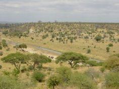 Paisaje de sabana La sabana es la biocenosis propia del clima tropical seco y húmedo. La encontramos en las inmediaciones del bosque ecuatorial, ...