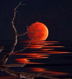Red Moon Reflections 😍😎😄 Via; - Sue Brimhall Red Moon Reflections 😍😎😄 Via; Moon Painting, Painting & Drawing, Red Moon, Orange Moon, Beautiful Moon, Art Abstrait, Pastel Art, Moon Art, Painting Techniques
