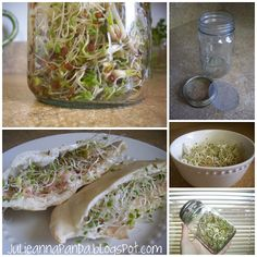How to grow your own sprouts. Great site!