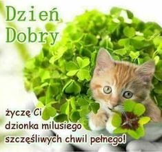 Herbs, Funny, Ha Ha, Facebook, Random, Animales, Polish, Photo Illustration, Deco