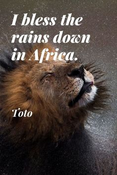 """I bless the rains down in Africa."" * Toto (American rock band) #travel #safari #Africa #quotes #sayings #inspirational #rain #lion #Toto #band"