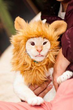Wanted the ferocity of a lion, got full derp instead. O_o - Imgur