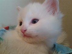 White kitten... - Agustin