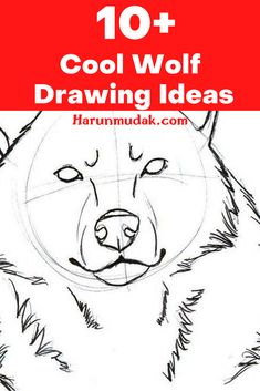 Wolves are very mysterious and sweet creatures, but of course they can be very wild. Although we can visualize the face of wolves in our minds, it will be difficult to draw. You can find wolf drawing ideas for that here.