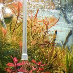 My sideview. Hot colors inside for the cold weather outside. By simon estades Diskus Aquarium, Hello To Myself, State Art, Say Hello, The Outsiders, Aquascaping, Aquariums, Cold Weather, Plants