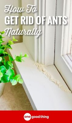 GOOD MULTIPLE WAYS TO GET RID OF ANTS--Whether they're outside or inside, ants can be a huge annoyance during the summer! Check out this guide for all the tips and tricks to get rid of ants. Homemade Cleaning Products, Natural Cleaning Products, Natural Products, Natural Ant Repellant, Borax For Ants, Ant Killer Recipe, Sugar Ants, Ant Spray, Ants In House