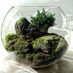 Awesome Bonsai Terrarium On The Jars 24