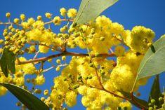 Australian Native Garden, Australian Flowers, Australian Plants, Early Spring Flowers, Garden Care, Australia Living, Plant Design, Amazing Gardens, Planting Flowers