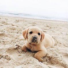 Beach bum where you from?!#ShopPriceless @shoppriceless️️  #Regram via @shoppriceless