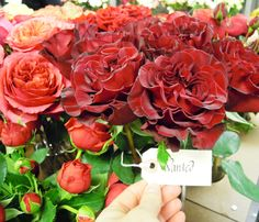 Rosa, 'Wanted' at Harvest, NYC flower market #Grove Design