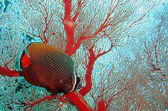 Google Image Result for http://www.phuket-trips.com/images/diving4.jpg