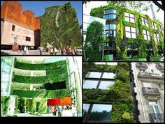 The magic of Patrick Blanc and his vertical gardens
