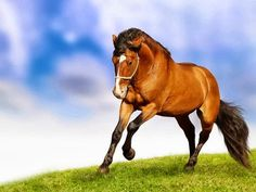Horse Wallpaper Hd Horses Hd Wallpapers Horse Desktop Wallpapers