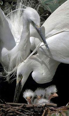 Аист - красивая птица, символ счастья и удачи. А ещё говорят, аист детишек приносит. Благословен тот дом, на крыше которого поселилось семейство аистов! /Stork - a beautiful bird , a symbol of happiness and good luck . And they say the stork brings babies . Blessed is the house , the roof of which the storks settled family !