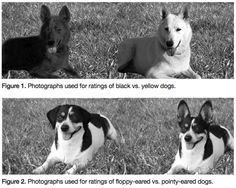 Pulp Fiction Gangster Gets Dogs | Dog Spies, Scientific American Blog Network