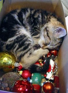 Our kitty has been stealing ornaments off the tree... this kitty is just too cute!