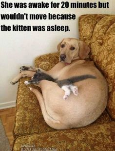 """She Was Awake for 20 Minutes But Wouldn't Move Because The Kitten Was Asleep"""