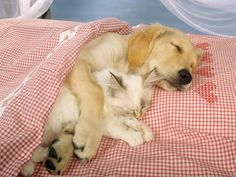 I just love it when puppies are friends with kitties :)